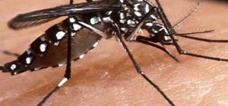 Regresaron los controles para evitar la proliferación de mosquitos
