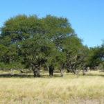 Al informe del gobierno sobre bosques nativos le falta información sobre desmontes e incendios