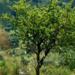 Ley de bosques: El gobierno analiza la propuesta de los ambientalistas para iniciar el proceso participativo