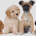 Recomiendan vacunar contra la rabia a todas las mascotas