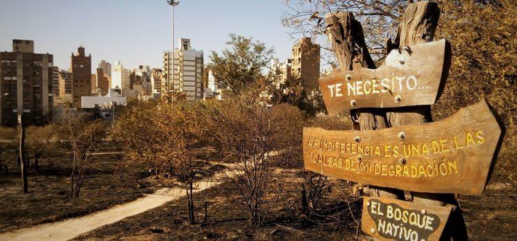 Cómo será la reconstrucción del bosquecito de la Ciudad Universitaria