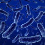 El increíble mecanismo de supervivencia de las bacterias resistentes a antibióticos