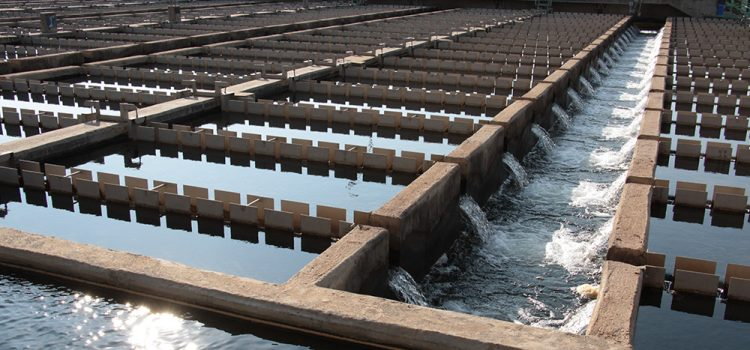 Consumimos en Córdoba cuatro veces más agua potable de lo sugerido por OMS