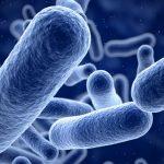 Las bacterias y la vida