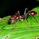 La convivencia de las hormigas
