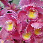 El genoma de las orquídeas