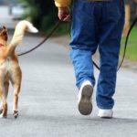 Los perros y los solteros