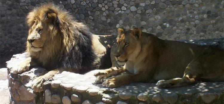Casi la mitad de los cordobeses se manifiesta en contra de que siga funcionando el Zoo