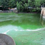 Alertan que el lago San Roque es peligroso por la presencia de algas y cianobacterias